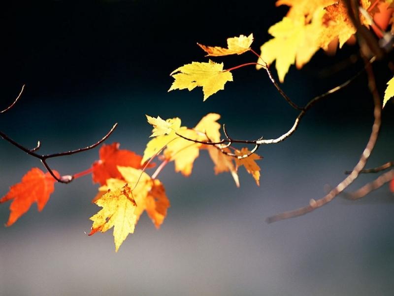 Handy-Wallpaper Herbst, Blätter, Objekte kostenlos herunterladen.