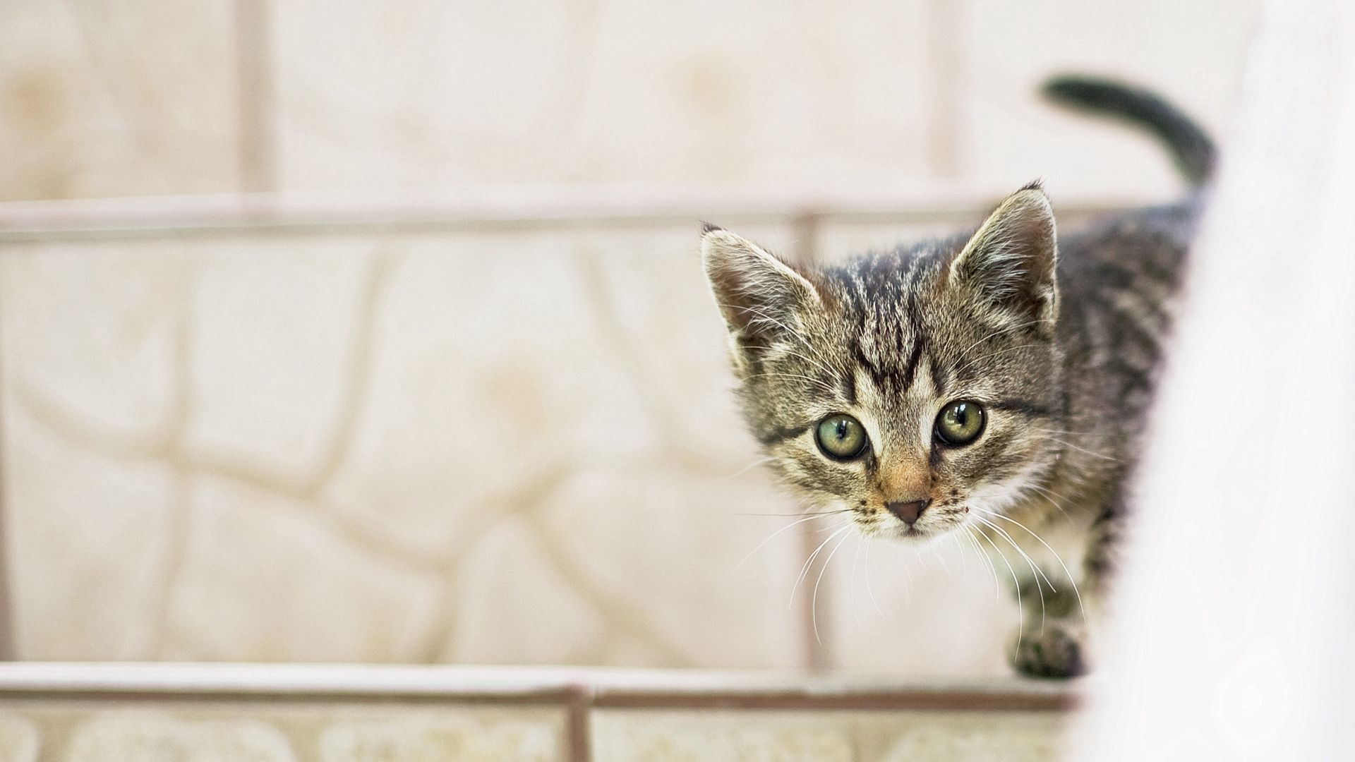 145398 download wallpaper Animals, Kitty, Kitten, Kid, Tot, Peek Out, Look Out screensavers and pictures for free
