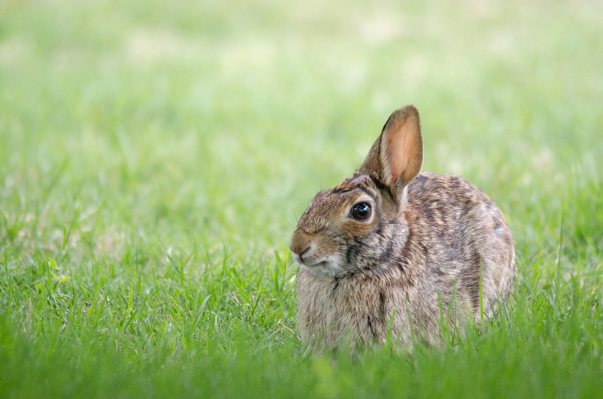68586 download wallpaper Animals, Grass, Hide, Hare, Ruzak screensavers and pictures for free