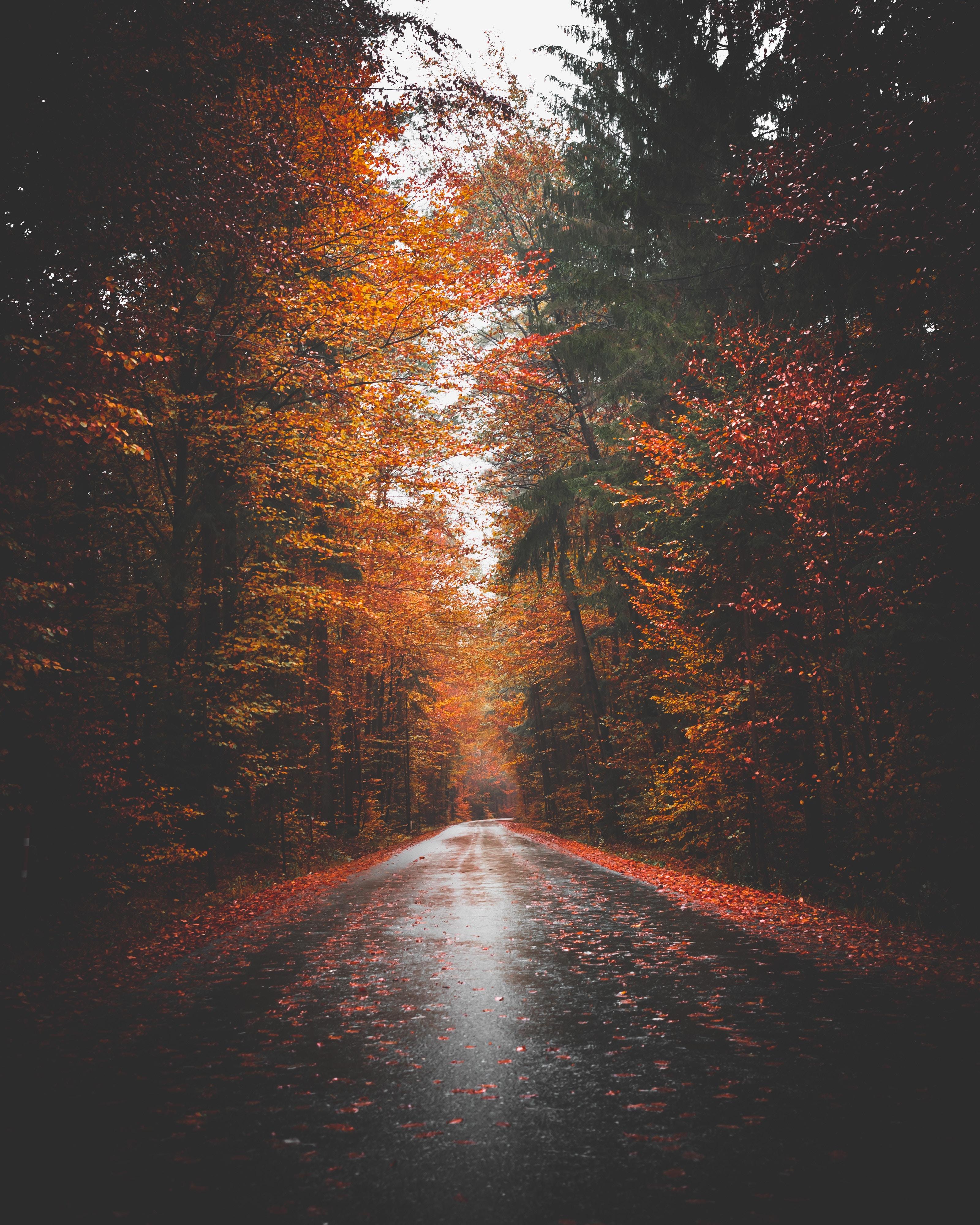 123295 скачать обои Асфальт, Лес, Природа, Деревья, Осень, Дорога - заставки и картинки бесплатно