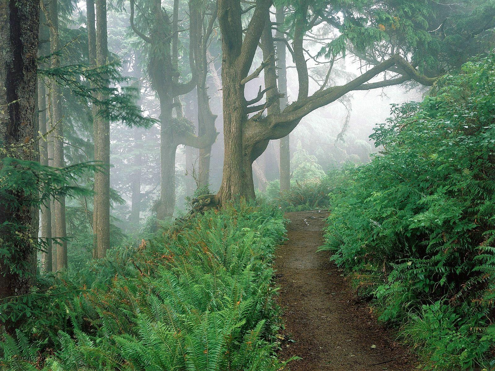 8388 скачать обои Пейзаж, Деревья, Дороги - заставки и картинки бесплатно