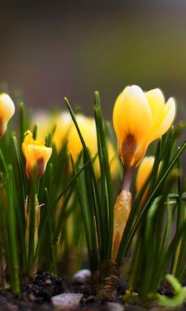 41774 descargar fondo de pantalla Plantas, Flores: protectores de pantalla e imágenes gratis