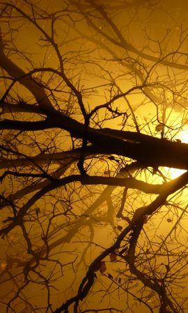 7849 скачать обои Растения, Природа, Деревья, Солнце - заставки и картинки бесплатно