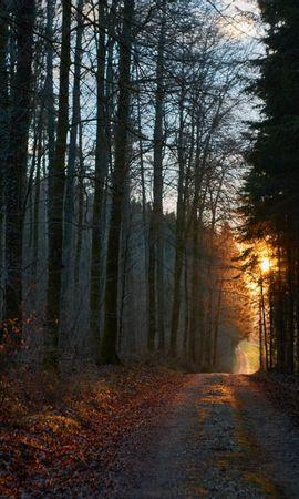 136585 скачать обои Лес, Дорога, Закат, Природа - заставки и картинки бесплатно