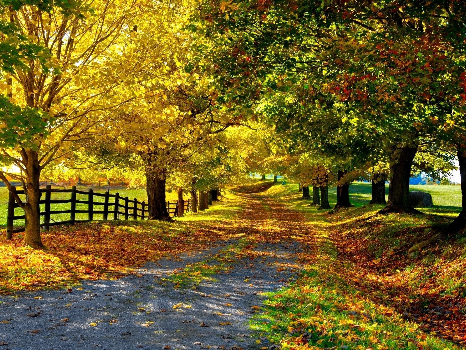 21451 download wallpaper Landscape, Trees, Roads, Autumn screensavers and pictures for free