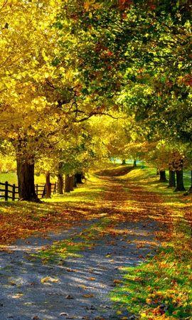 21451 скачать обои Пейзаж, Деревья, Дороги, Осень - заставки и картинки бесплатно