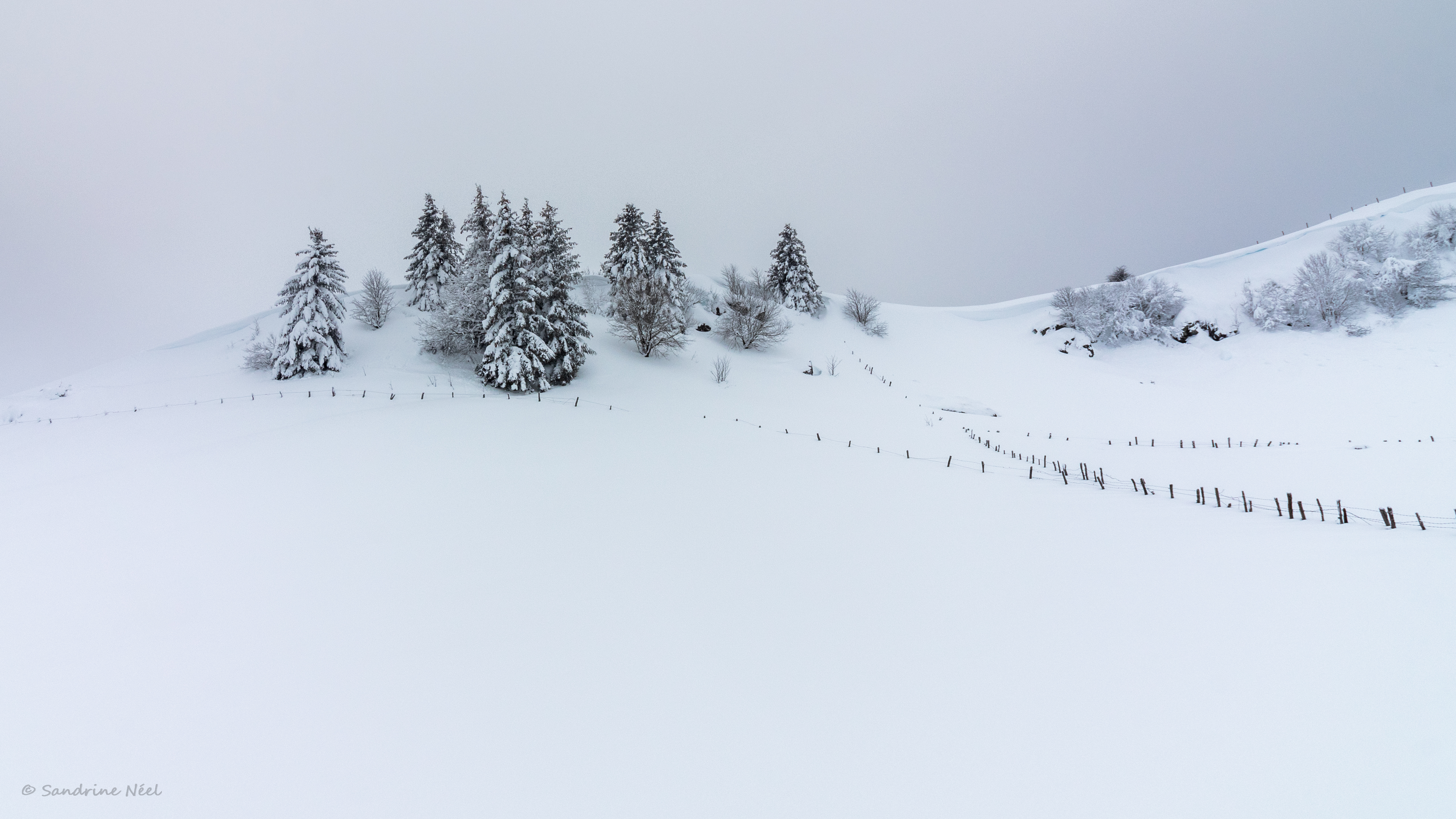 116197 download wallpaper Nature, Hill, Snow, Trees, Winter, Fir-Trees screensavers and pictures for free
