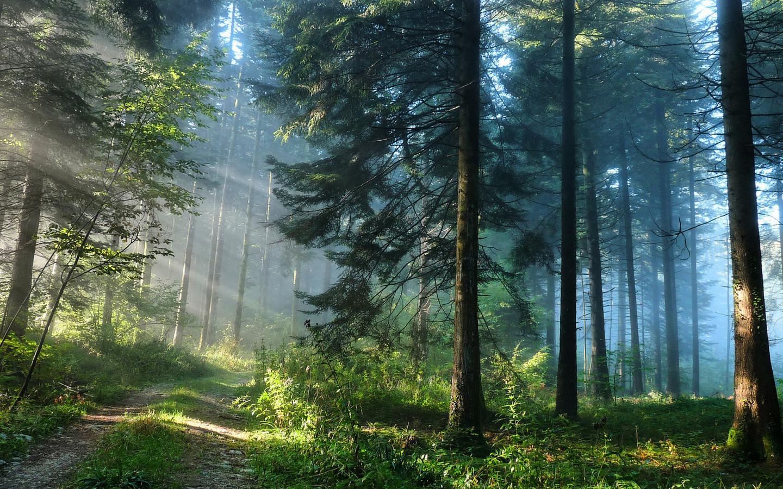 41956 Hintergrundbild herunterladen Landschaft, Bäume, Natur - Bildschirmschoner und Bilder kostenlos