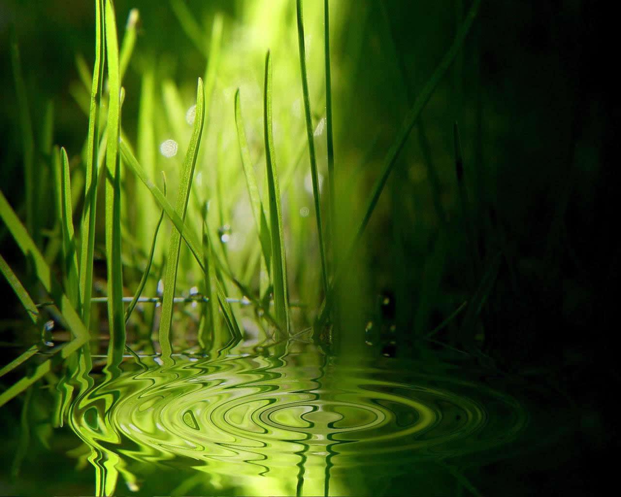 16112 скачать обои Вода, Трава, Фон - заставки и картинки бесплатно
