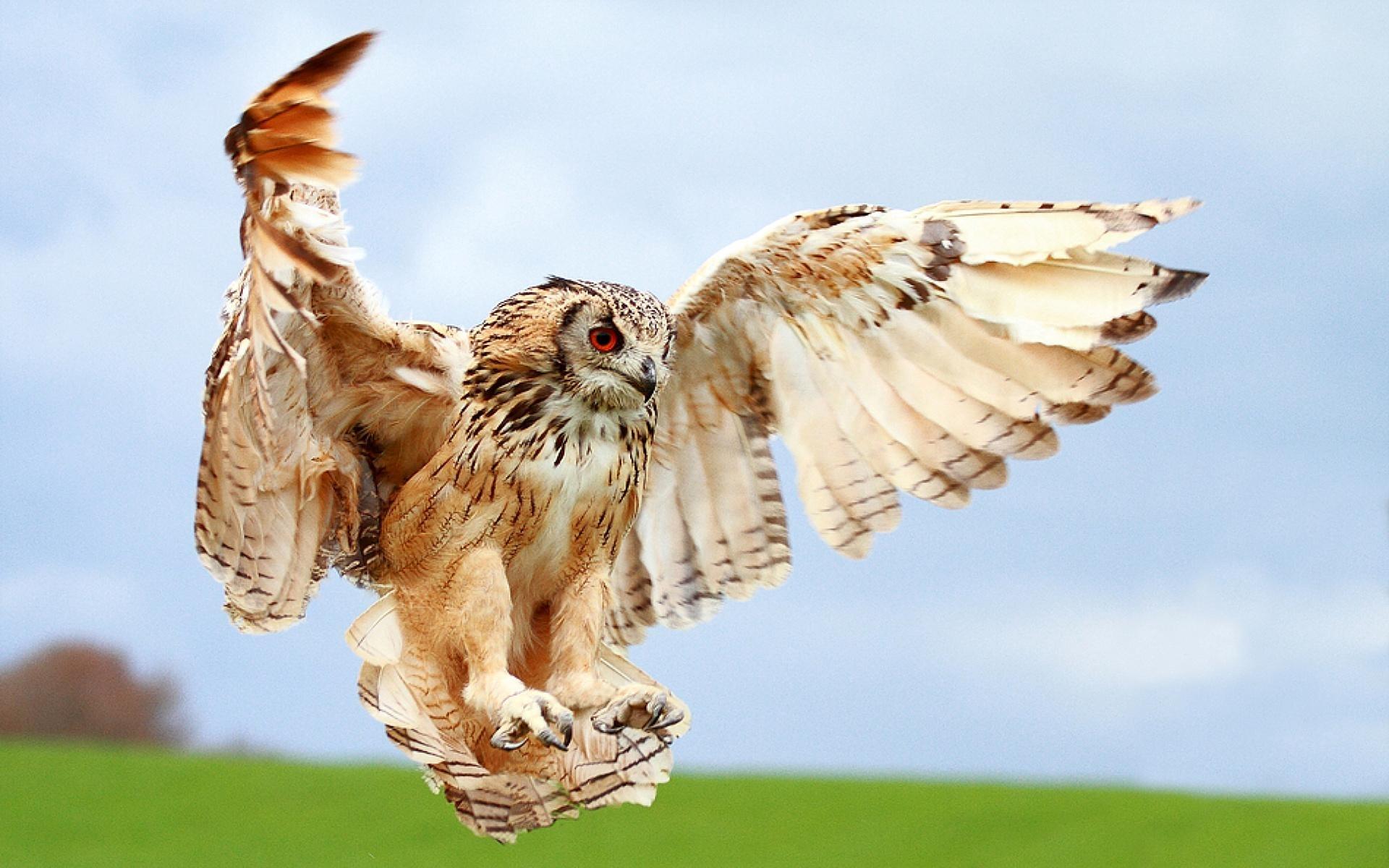46741 скачать обои Животные, Птицы, Совы - заставки и картинки бесплатно