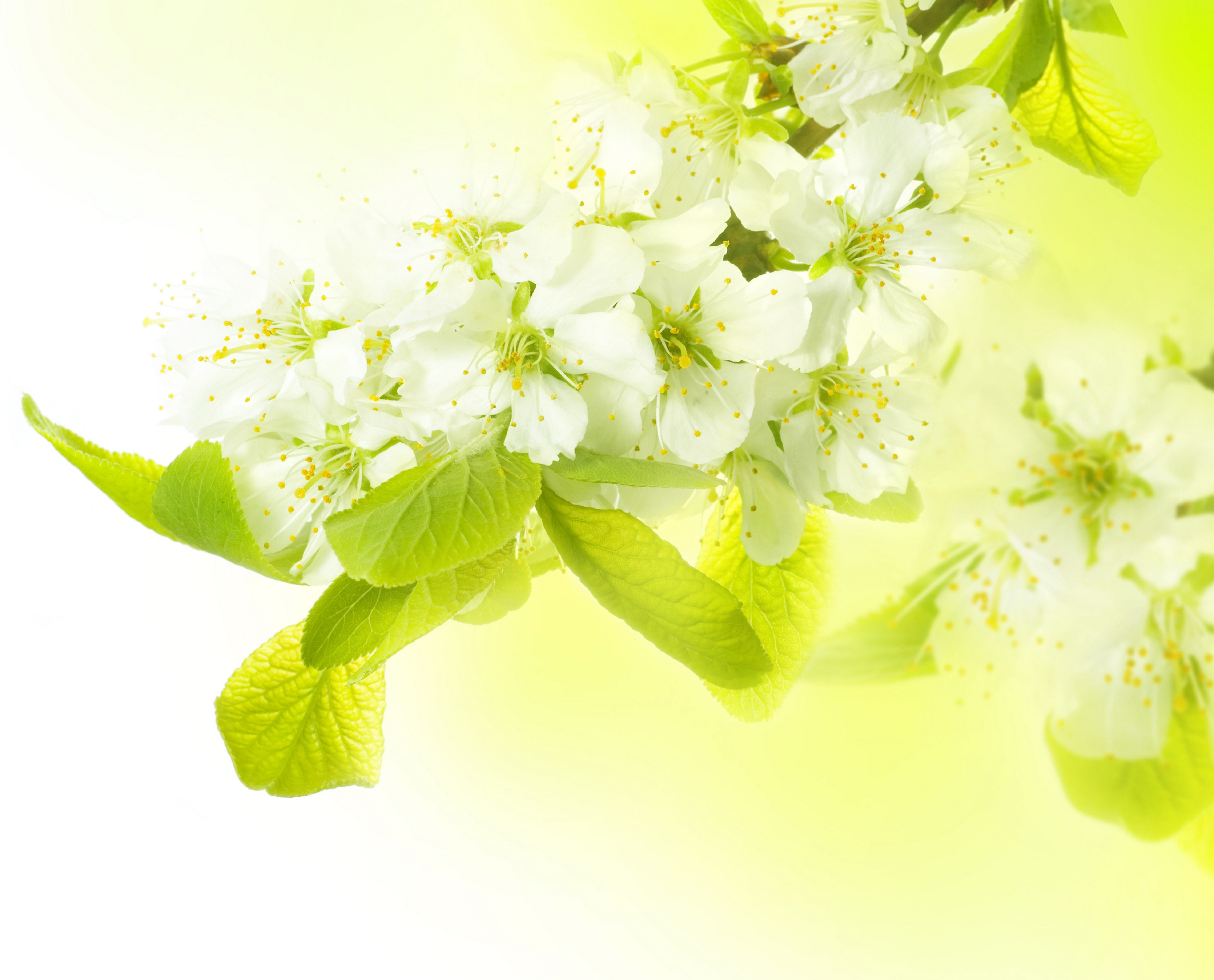 112238 скачать обои Макро, Ветка, Весна, Яблоня, Цветы - заставки и картинки бесплатно