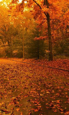 24478 скачать обои Пейзаж, Дороги, Осень, Листья - заставки и картинки бесплатно