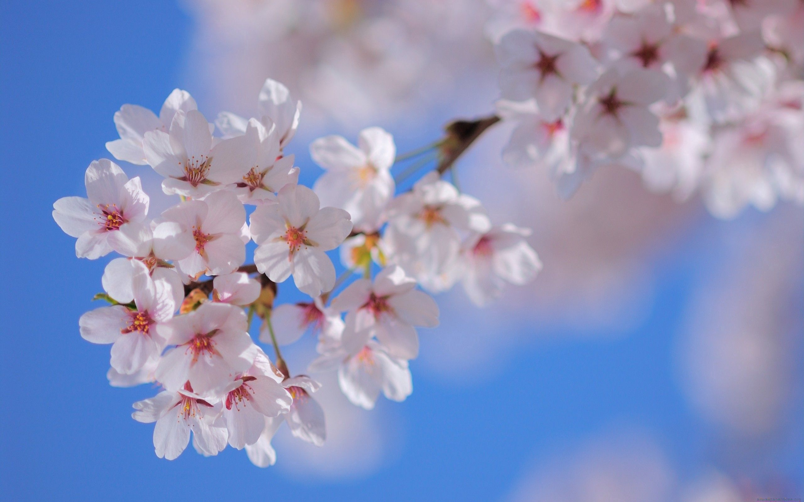 78059 Screensavers and Wallpapers Bloom for phone. Download Flowers, Plant, Macro, Bloom, Flowering, Branch, Spring pictures for free