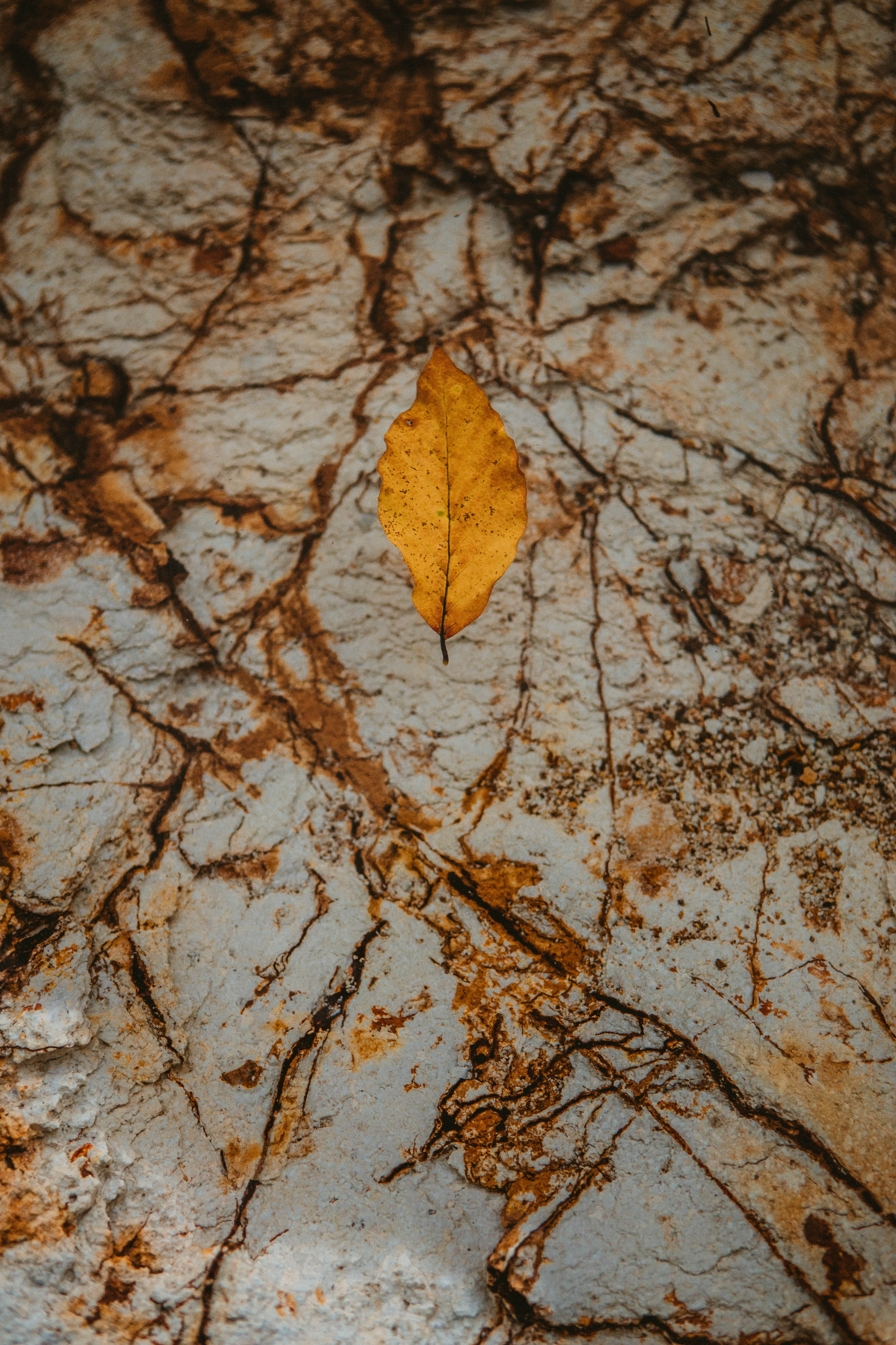 147567 download wallpaper Macro, Leaflet, Dry, Autumn, Rock, Stone screensavers and pictures for free