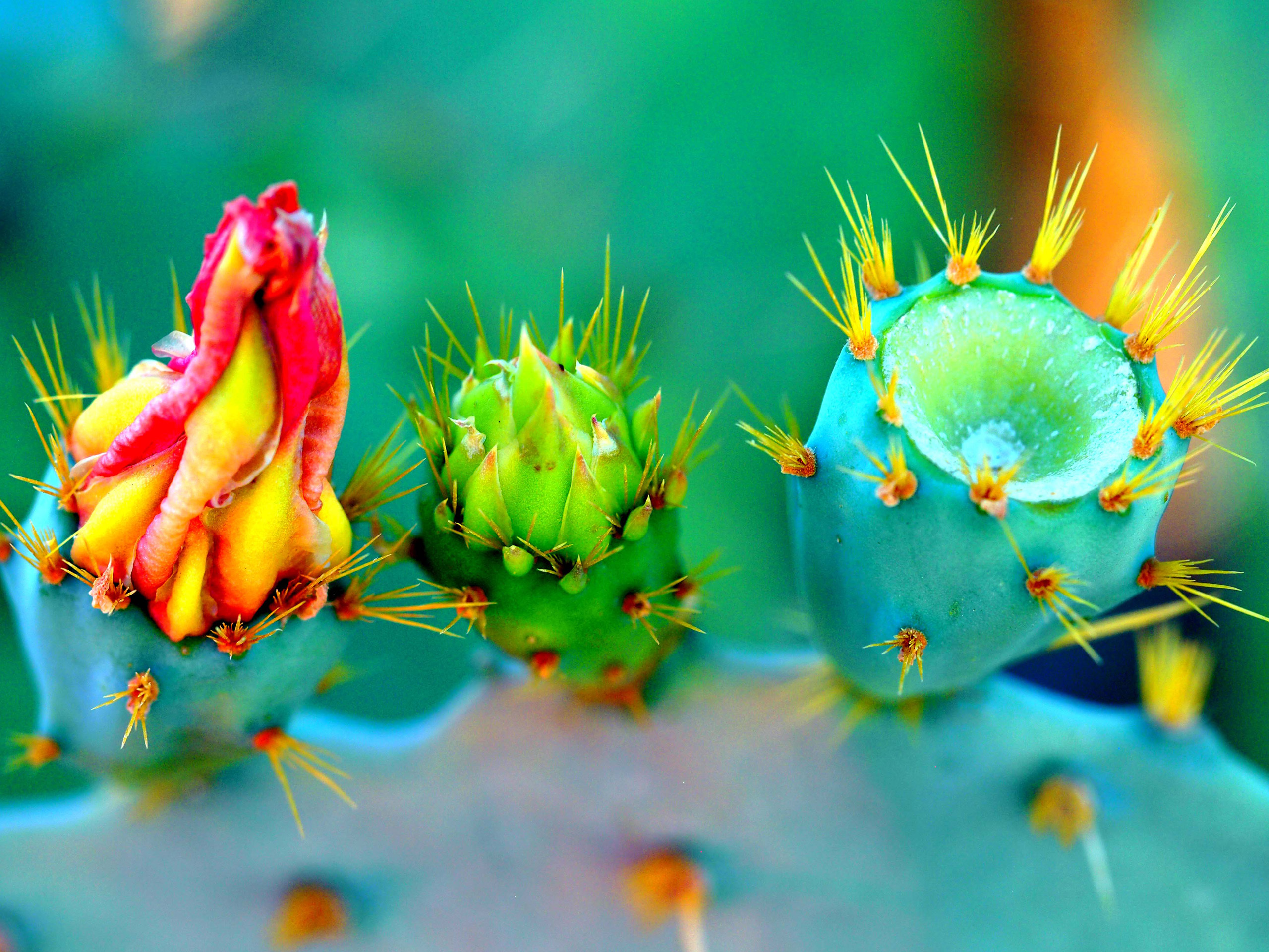 Popular Cactus images for mobile phone