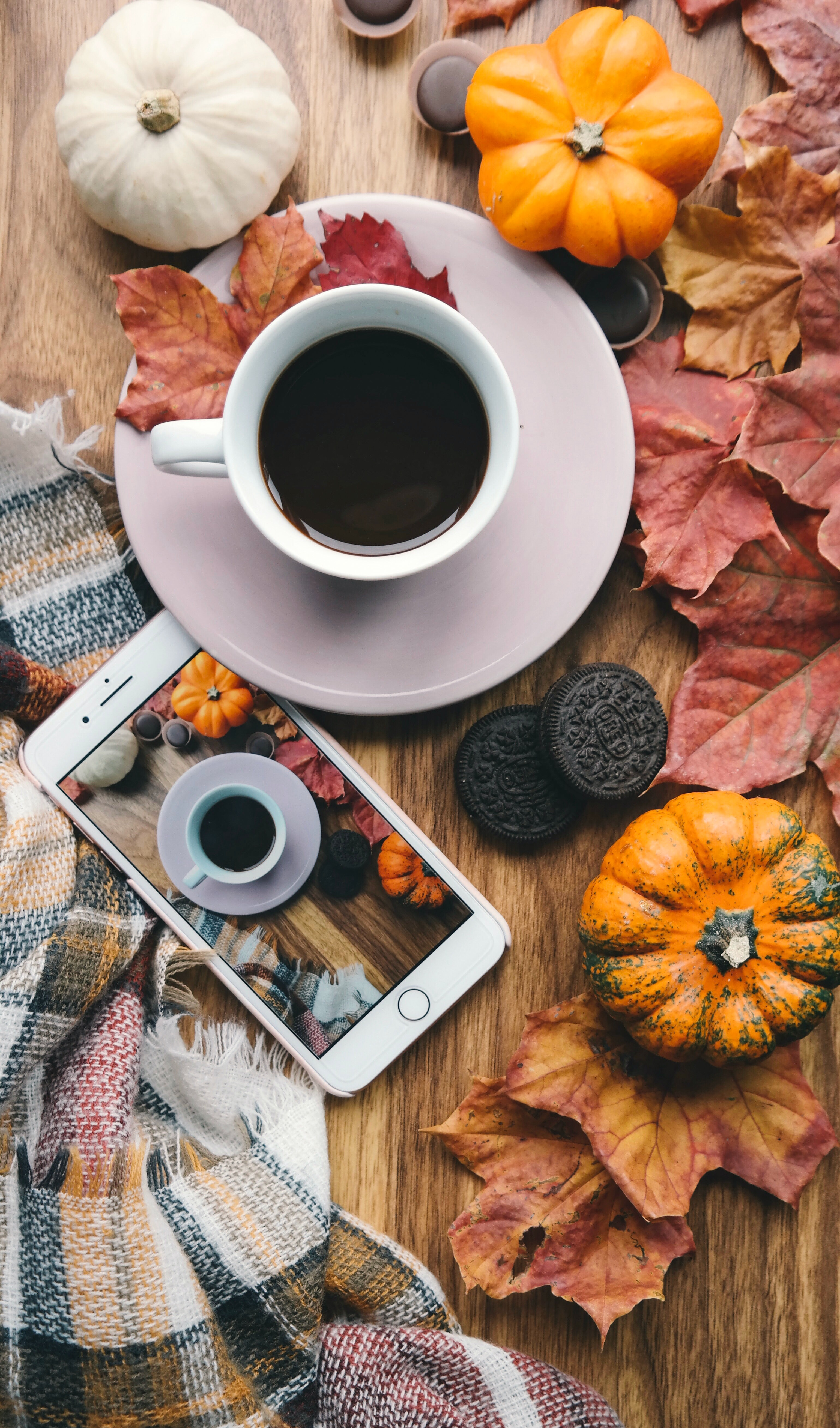 92618 Screensavers and Wallpapers Pumpkin for phone. Download Autumn, Coffee, Pumpkin, Miscellanea, Miscellaneous, Telephone pictures for free