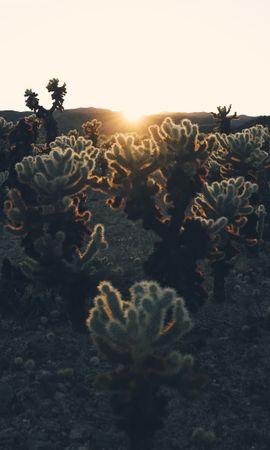 63086 скачать обои Природа, Солнечный Свет, Закат, Растения, Солнце, Кактусы - заставки и картинки бесплатно