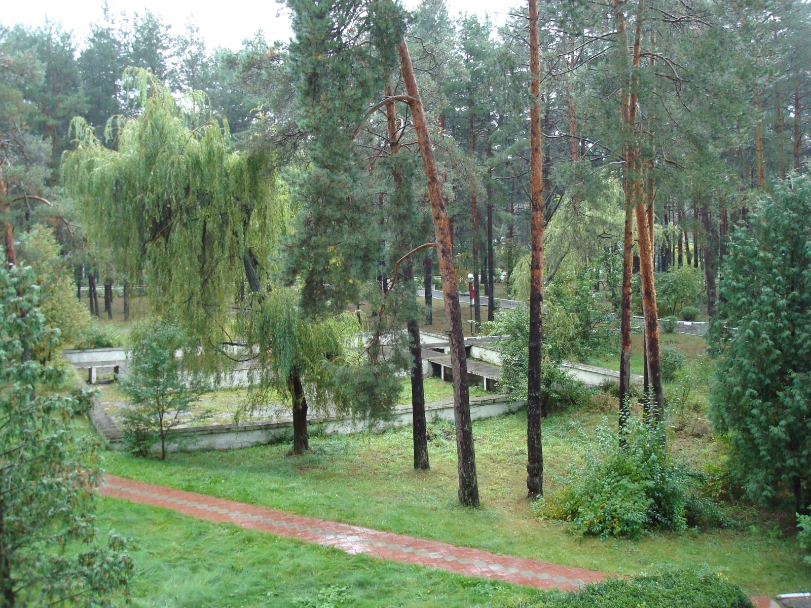 4876 скачать обои Пейзаж, Деревья - заставки и картинки бесплатно