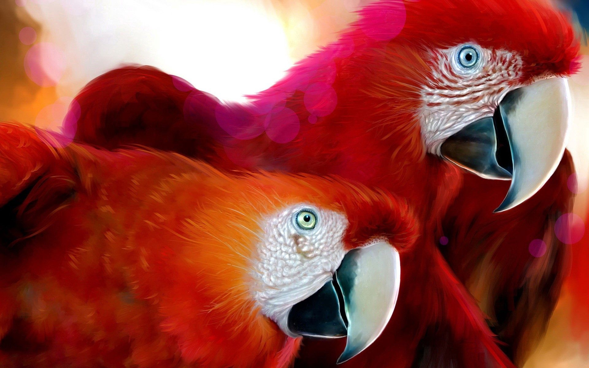 145107 download wallpaper Animals, Parrots, Couple, Pair, Beak, Color screensavers and pictures for free