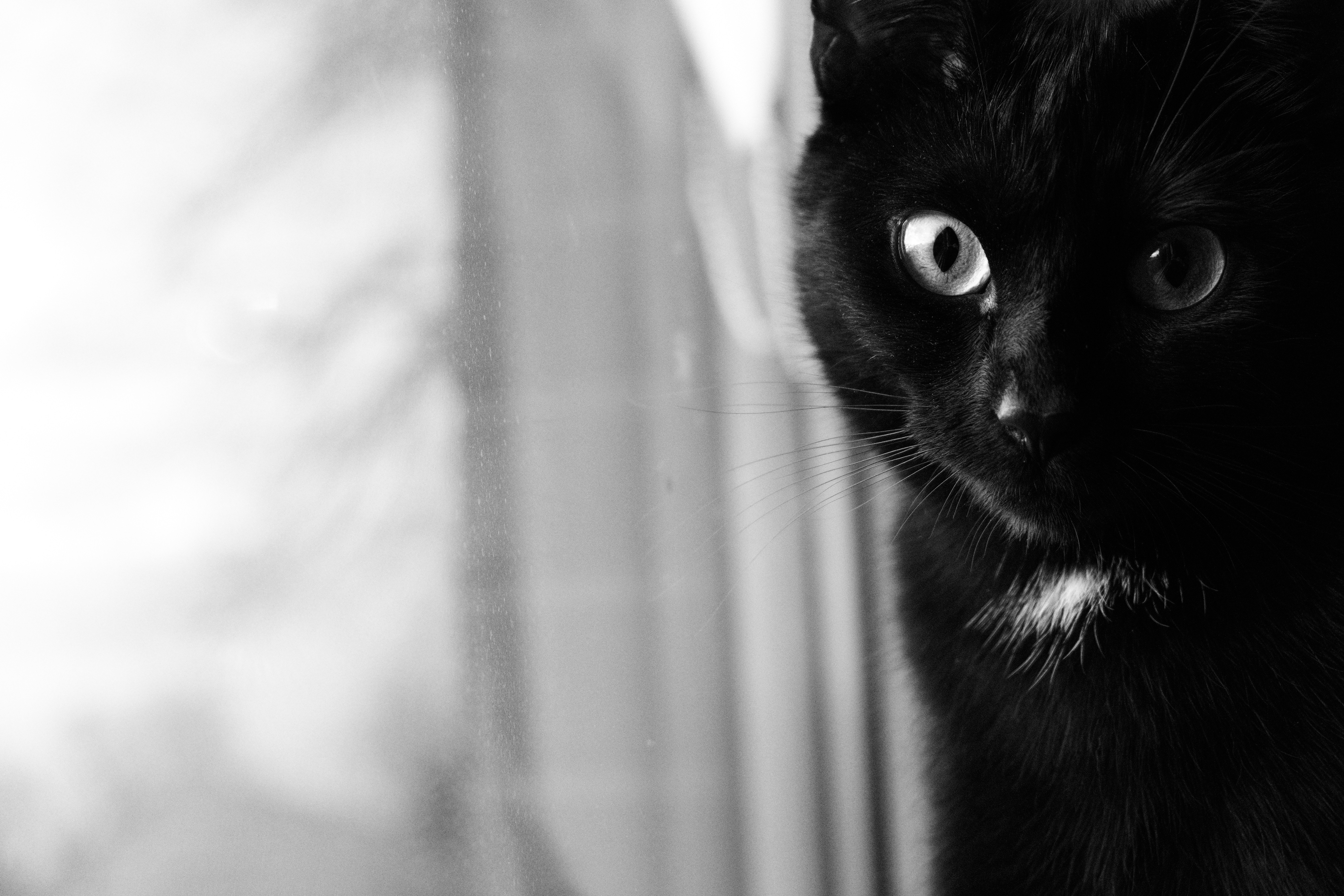 143681 download wallpaper Animals, Cat, Bw, Chb, Muzzle, Black Cat, Eyes screensavers and pictures for free