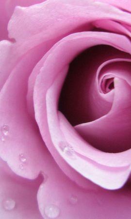 25796 скачать обои Растения, Цветы, Розы, Капли - заставки и картинки бесплатно