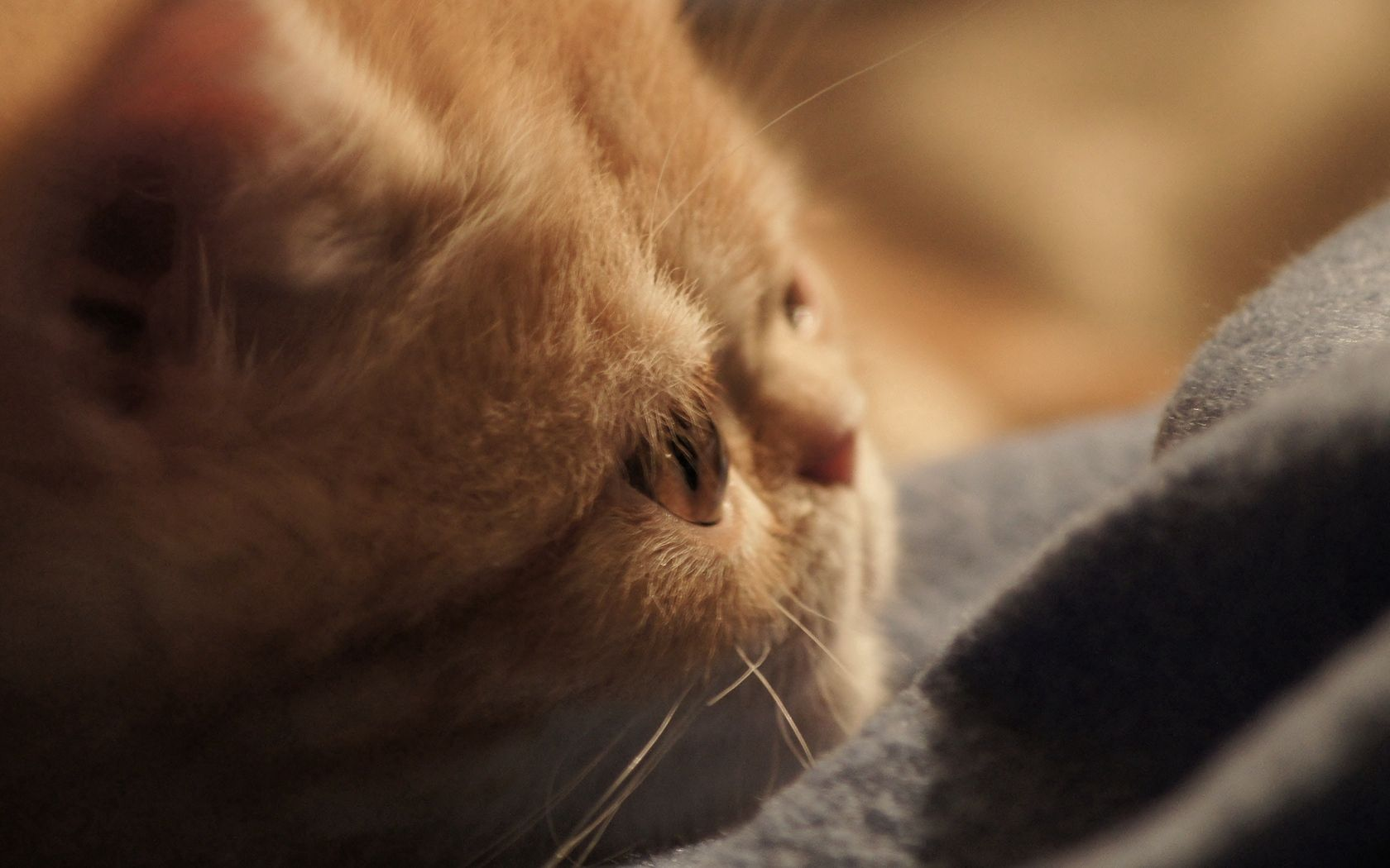 90819 download wallpaper Animals, Kitty, Kitten, Cat, Nice, Sweetheart, Muzzle screensavers and pictures for free