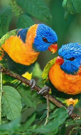 9039 download wallpaper Animals, Birds screensavers and pictures for free