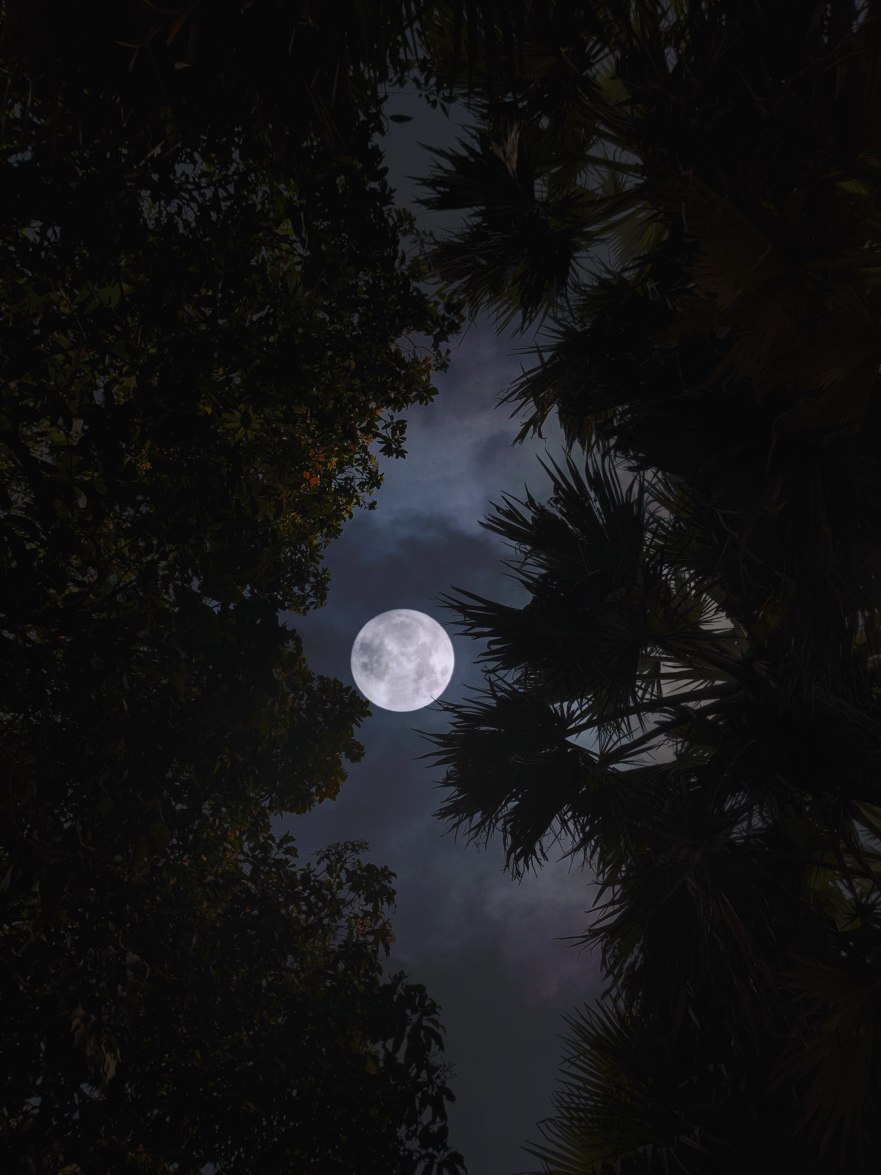 77455 скачать обои Темные, Луна, Деревья, Листья, Ветки, Ночь, Темный - заставки и картинки бесплатно