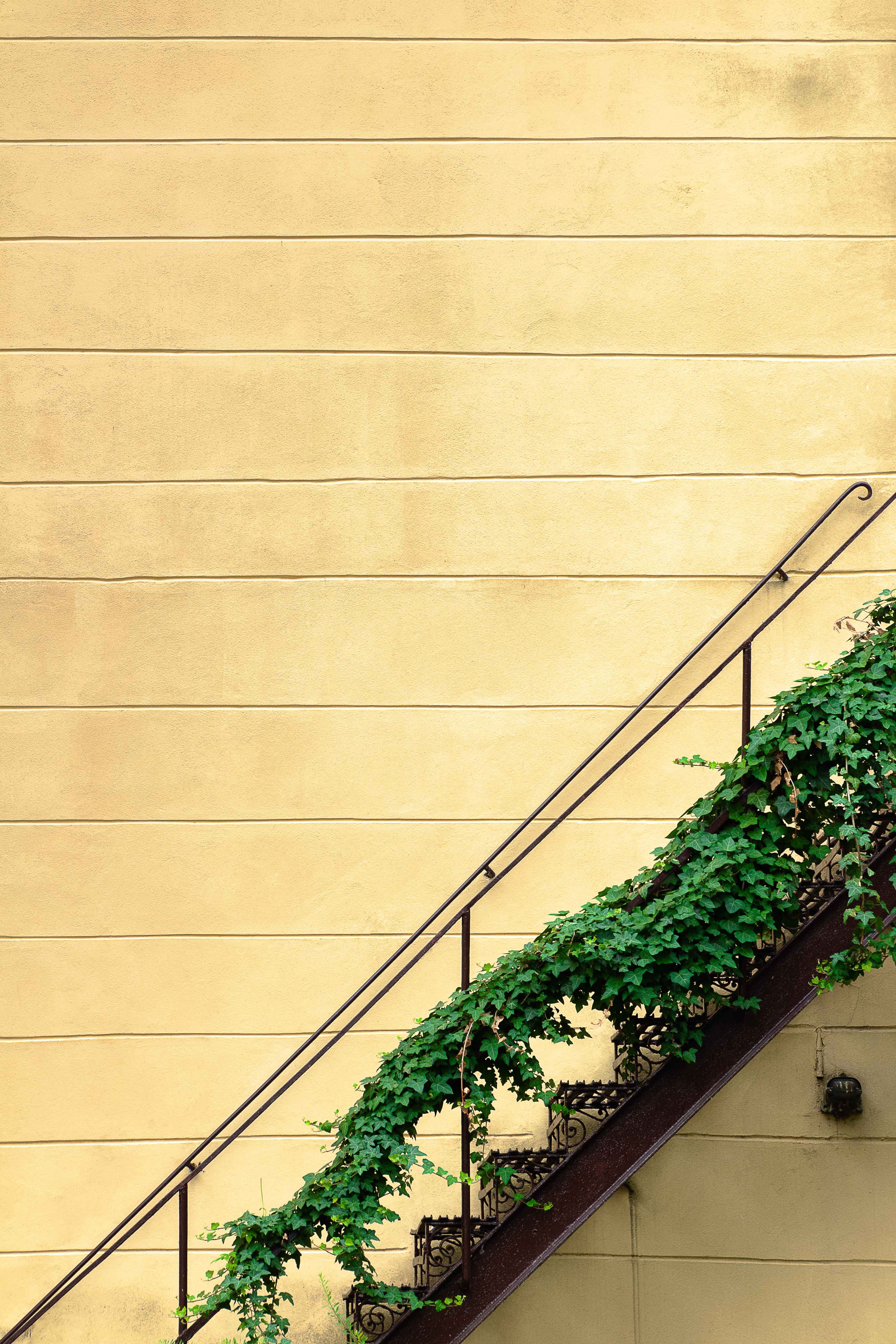 72293 download wallpaper Wall, Plant, Minimalism, Stairs, Ladder screensavers and pictures for free