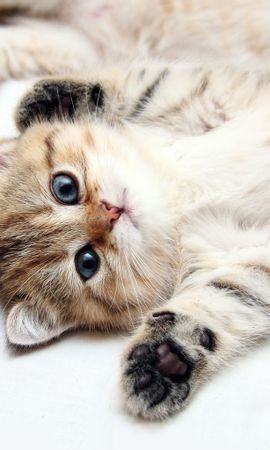 8602 download wallpaper Animals, Cats screensavers and pictures for free
