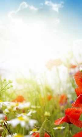 22970 скачать обои Растения, Цветы, Маки, Солнце, Облака - заставки и картинки бесплатно