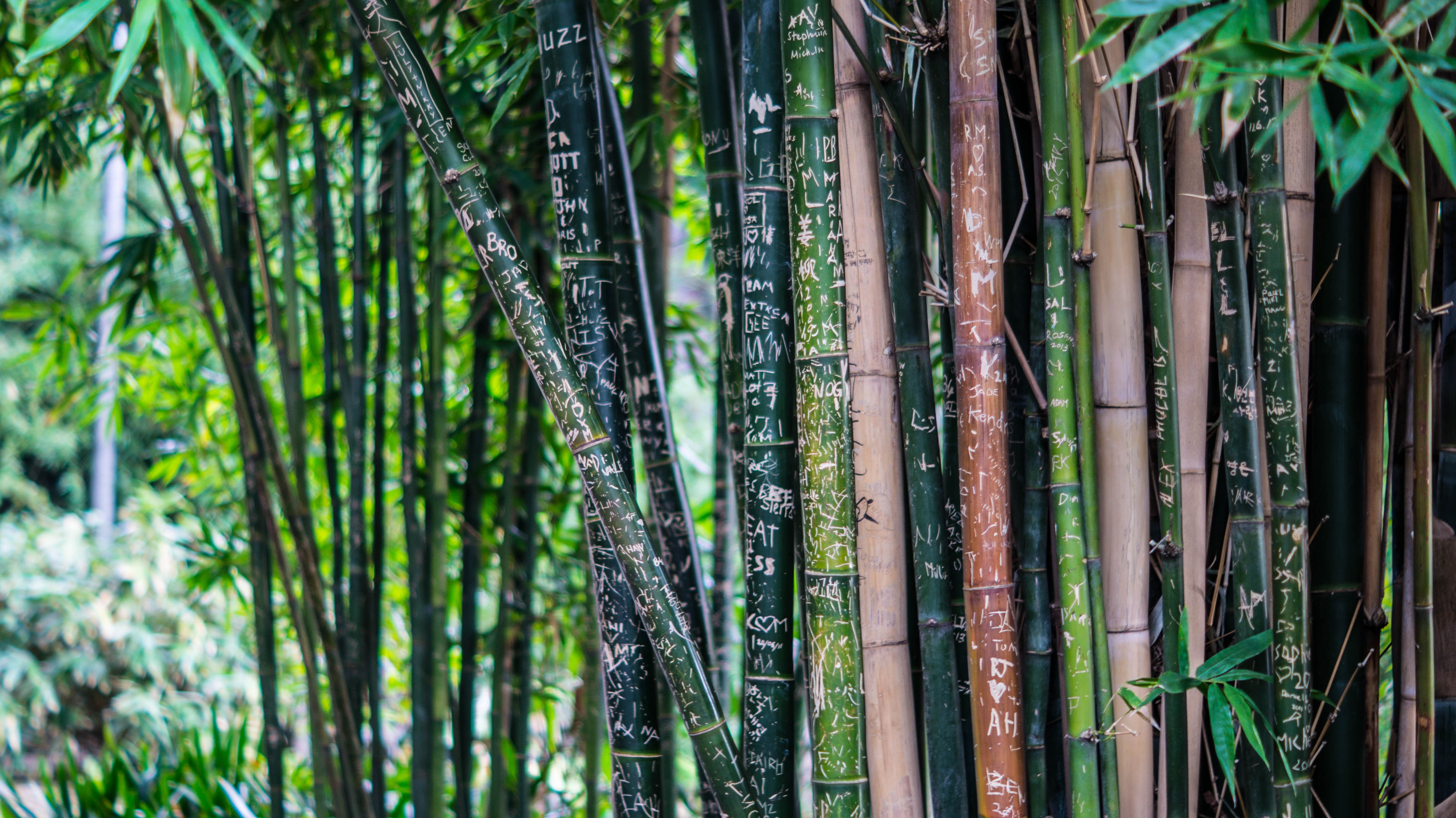 63546 download wallpaper Nature, Bamboo, Plant, Lettering, Inscriptions screensavers and pictures for free