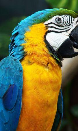 32985 baixar papel de parede Animais, Aves, Papagaios - protetores de tela e imagens gratuitamente