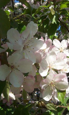 9316 скачать обои Растения, Цветы - заставки и картинки бесплатно