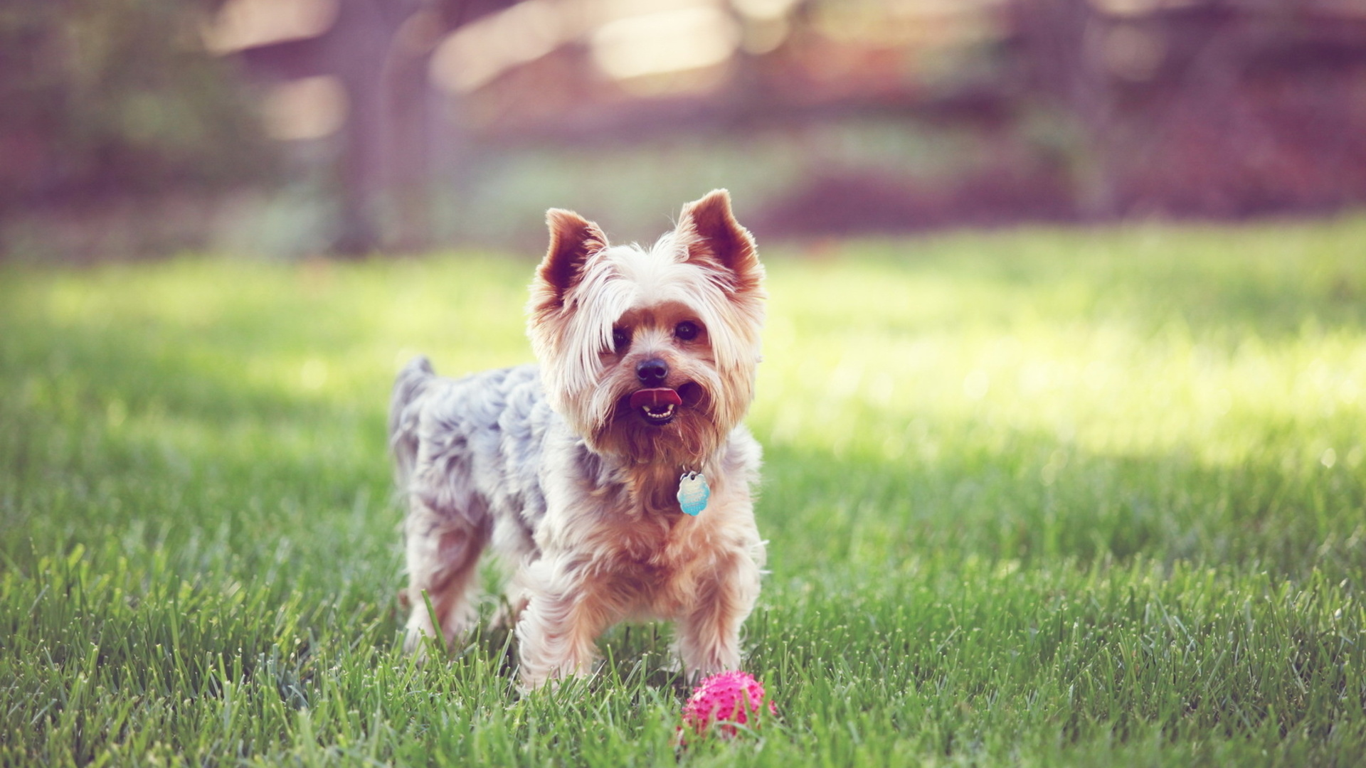 15655 download wallpaper Animals, Dogs screensavers and pictures for free