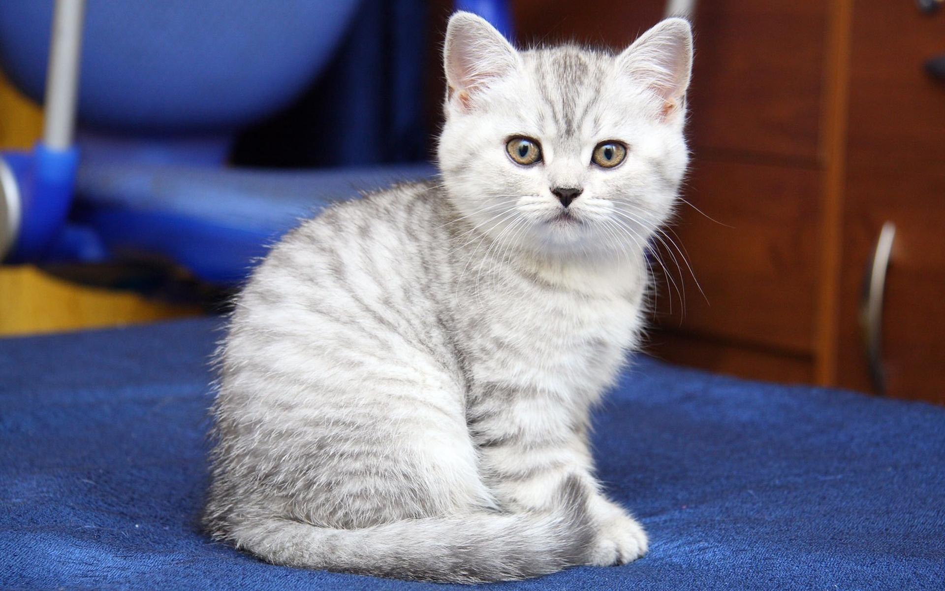 24291 скачать обои Животные, Кошки (Коты, Котики) - заставки и картинки бесплатно