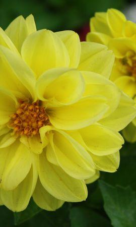 4592 скачать обои Растения, Цветы - заставки и картинки бесплатно