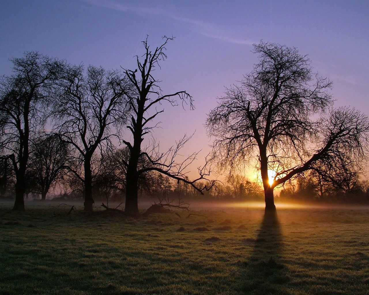 60307 download wallpaper Nature, Trees, Sun Rays, Sunlight, Shine, Light, Morning, Fog, Cool, Coolness screensavers and pictures for free