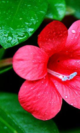 43364 télécharger le fond d'écran Plantes, Fleurs - économiseurs d'écran et images gratuitement