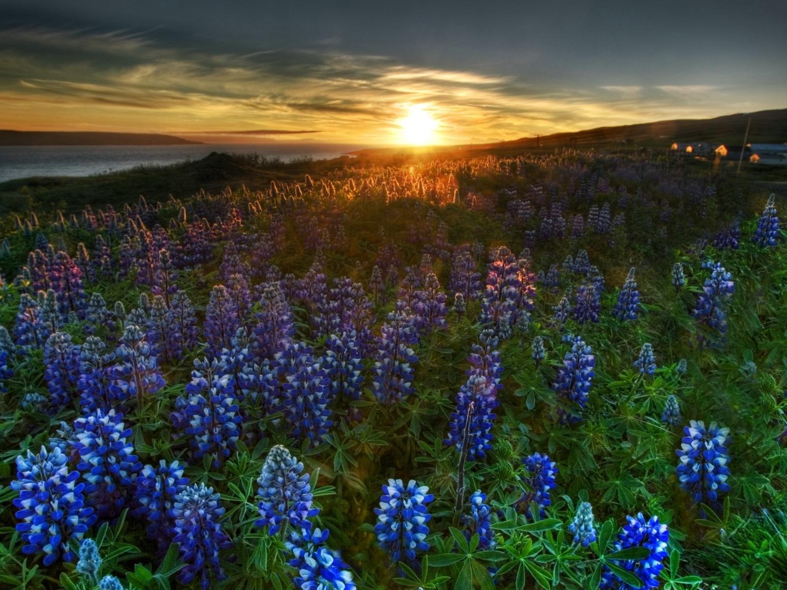 5165 скачать обои Растения, Пейзаж, Цветы, Закат, Солнце - заставки и картинки бесплатно