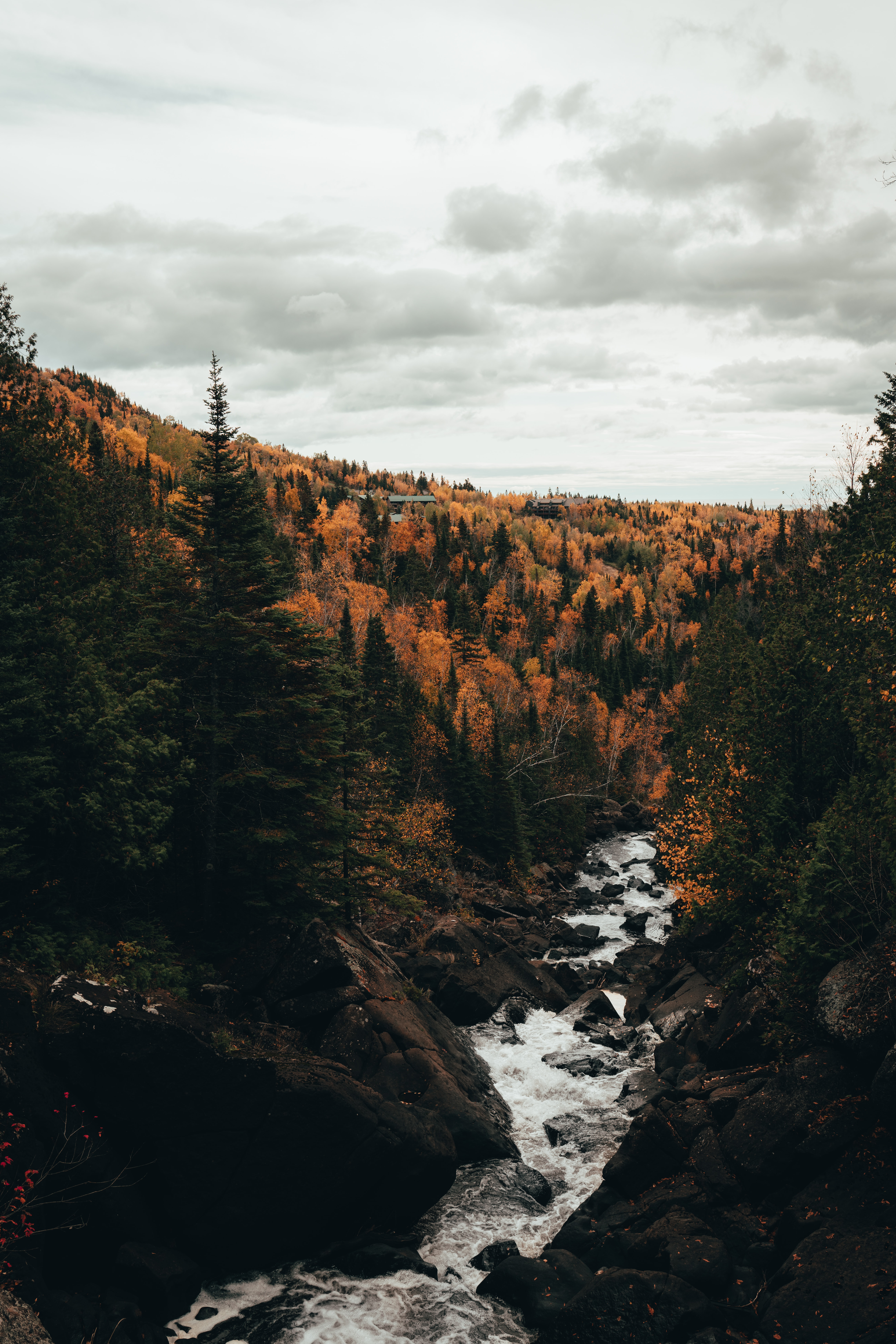 135236 download wallpaper Nature, Rivers, Trees, Autumn, Stones, Flow, Stream screensavers and pictures for free