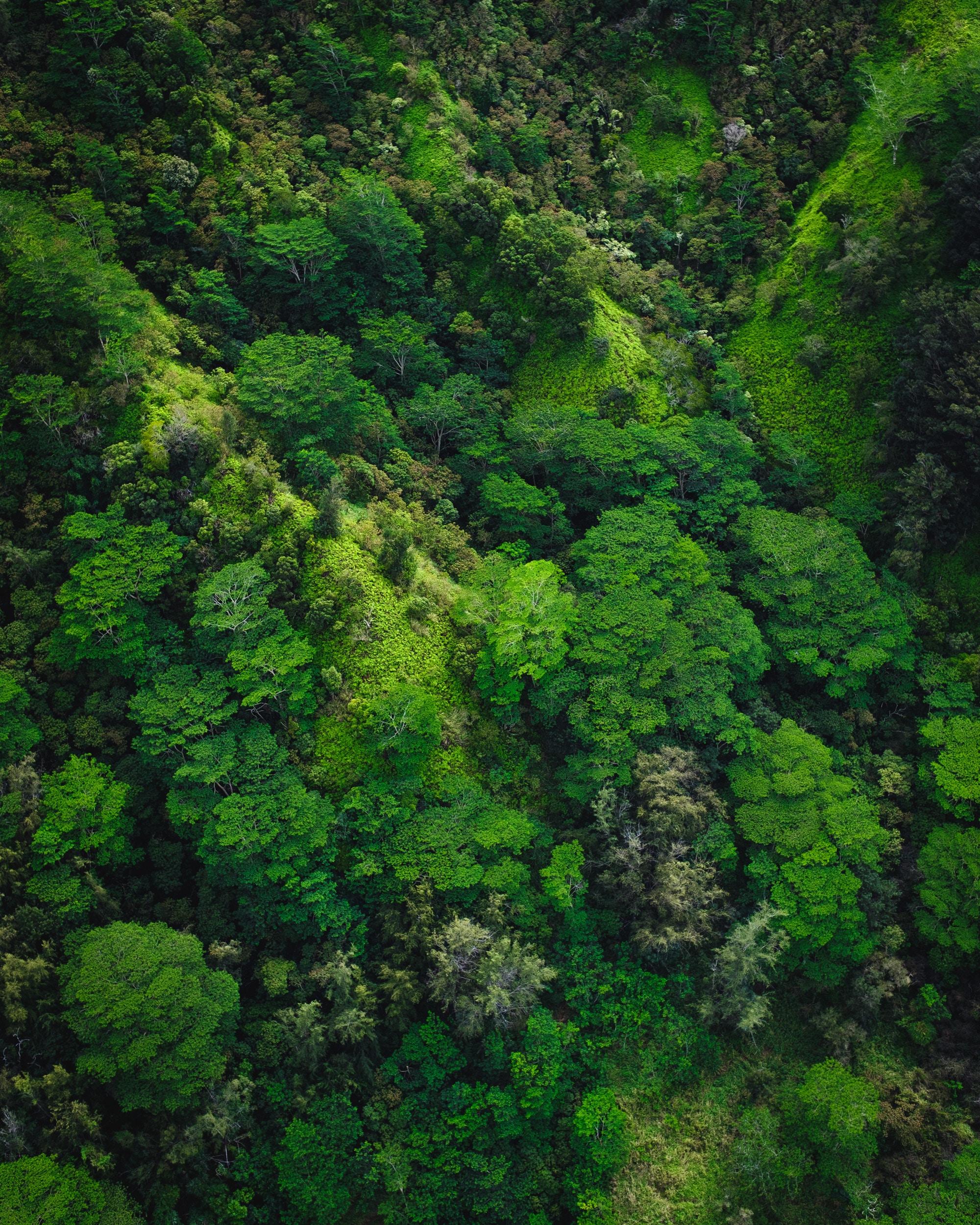 86307 Hintergrundbild 720x1280 kostenlos auf deinem Handy, lade Bilder Natur, Bäume, Blick Von Oben, Wald 720x1280 auf dein Handy herunter