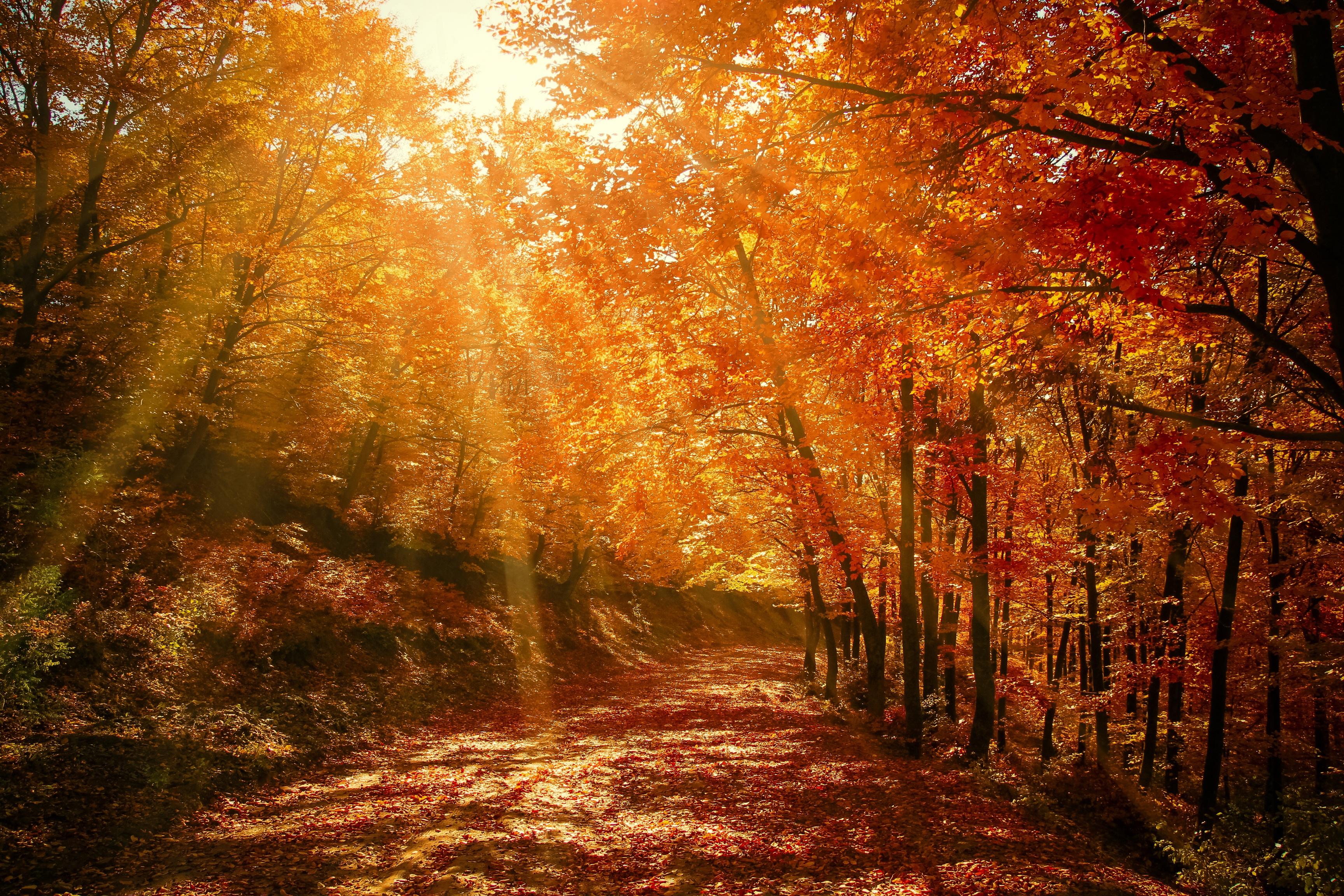 64335 завантажити шпалери Природа, Осінь, Листя, Ліс, Парк, Сонячне Світло, Сонячного Світла - заставки і картинки безкоштовно