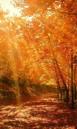 64335 скачать обои Природа, Осень, Лес, Парк, Листва, Солнечный Свет - заставки и картинки бесплатно