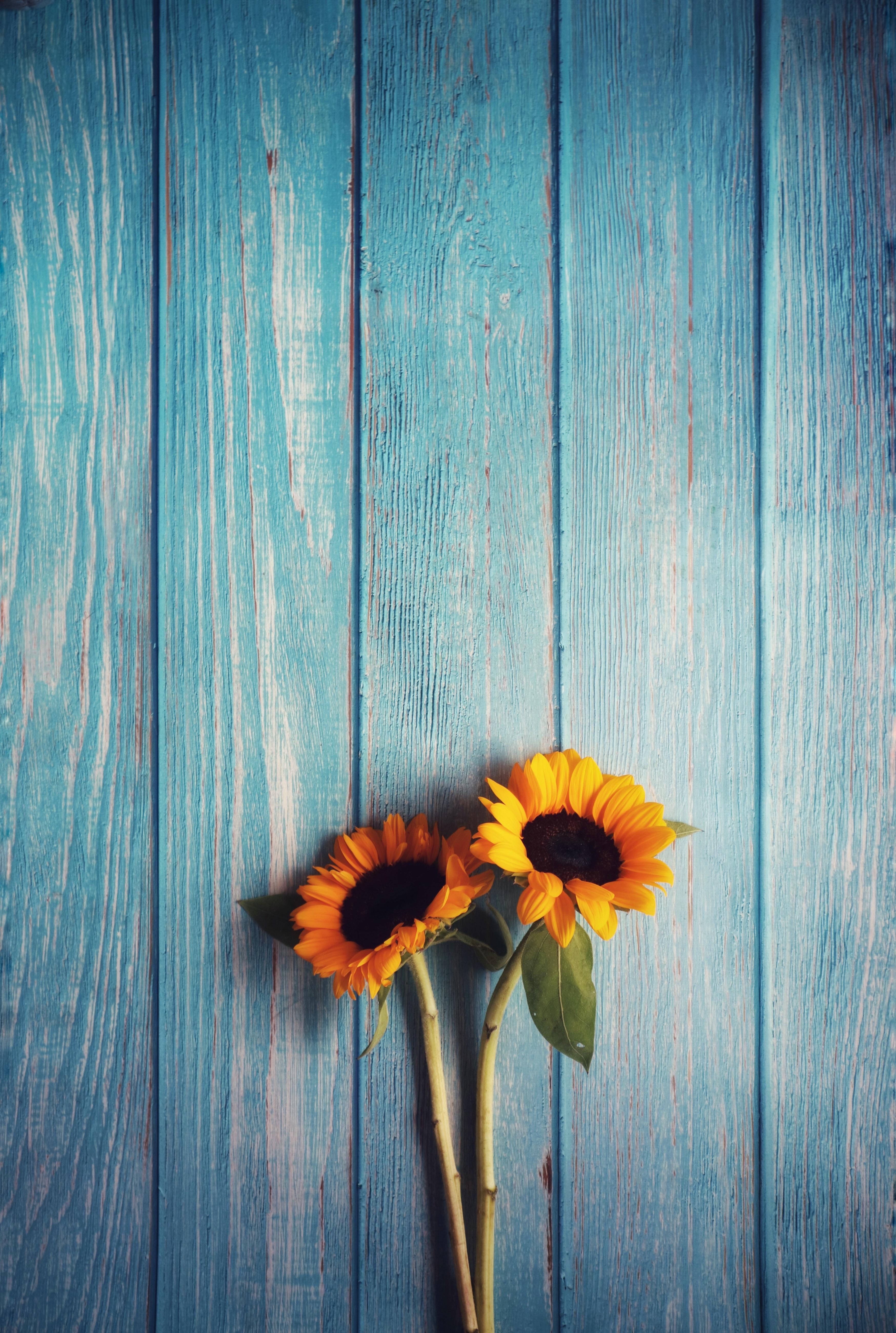 107348 Заставки и Обои Подсолнухи на телефон. Скачать Цветы, Деревянный, Текстура, Подсолнухи картинки бесплатно
