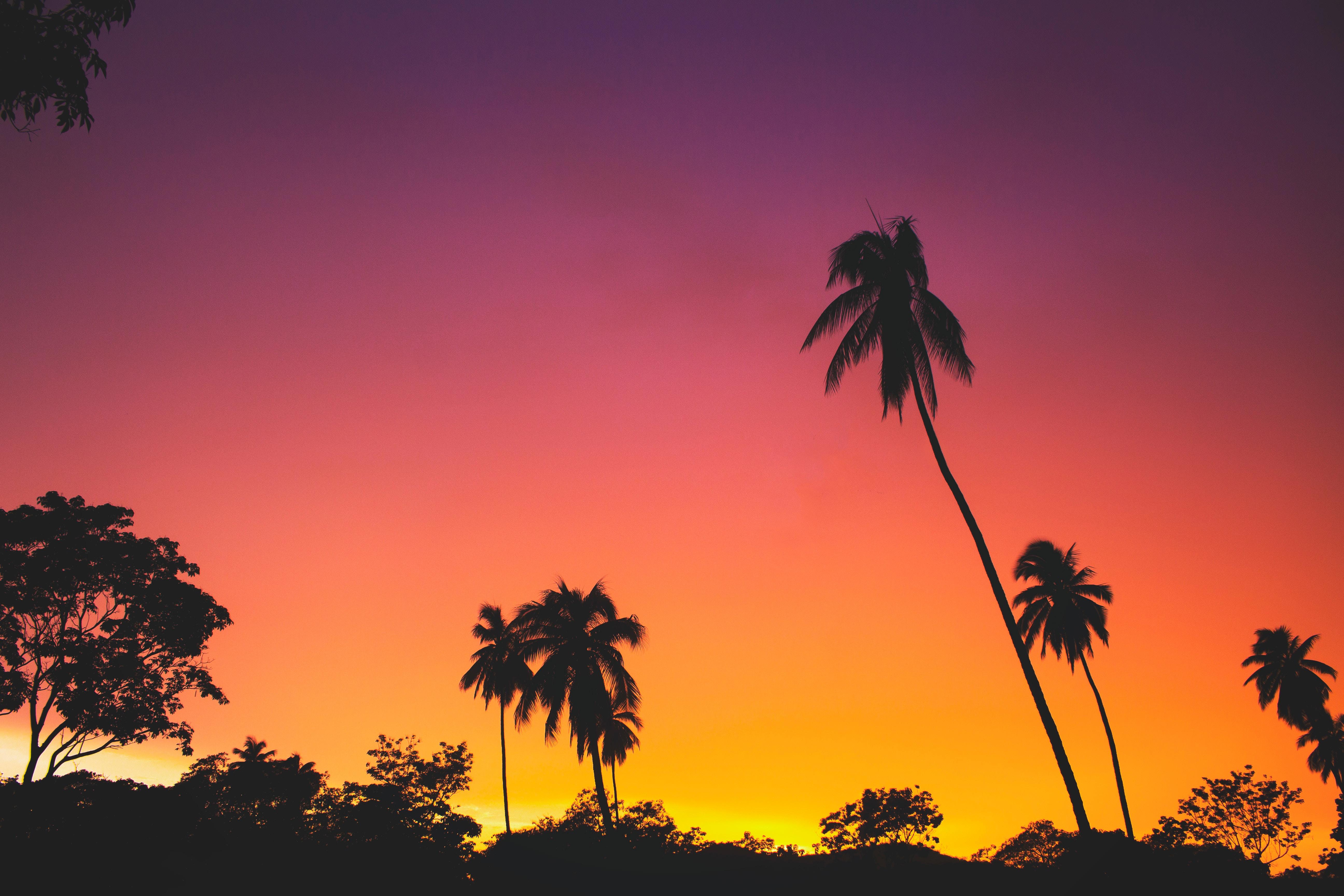 83922 免費下載壁紙 性质, 日落, 剪影, 热带, 热带地区, 天空, 棕榈 屏保和圖片
