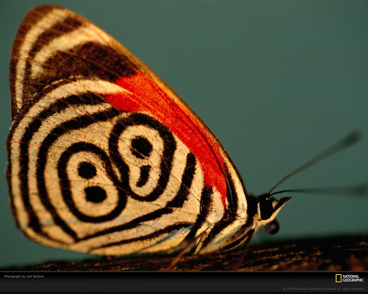 7928 скачать обои Бабочки, Насекомые - заставки и картинки бесплатно