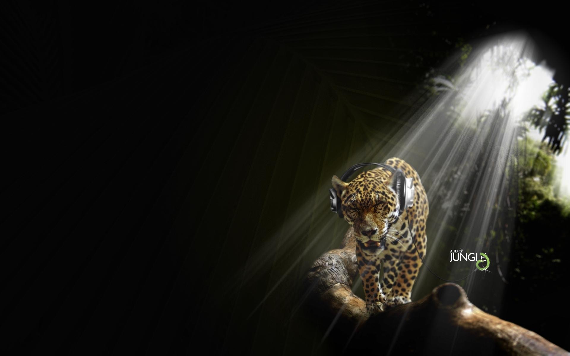 8643 скачать обои Юмор, Музыка, Животные, Леопарды - заставки и картинки бесплатно