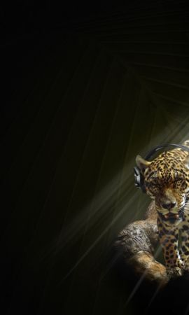 8643 download wallpaper Funny, Music, Animals, Leopards screensavers and pictures for free