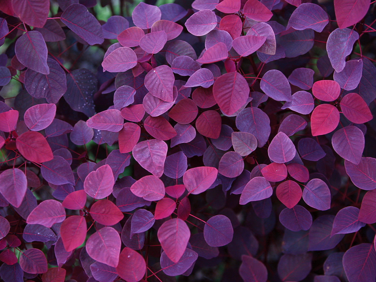 15097 download wallpaper Plants, Background, Animals, Leaves, Violet screensavers and pictures for free
